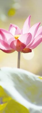Ayurveda und Yoga im Herbst