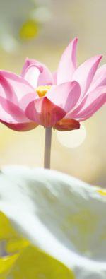 Ayurveda Tipp: Das Heim spiritualisieren