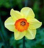 Artikel des Monats: Vergebung - Bedeutung von Ostern