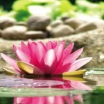 Yogatherapie-Seminare