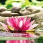 Vorbereitung und Tipps für ein erfolgreiches Sadhana