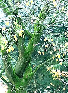Waldbaden - Shinrin Yoku Achtsamkeitswochenende