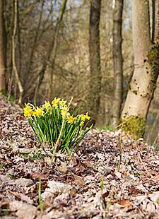Schamanisches Frühlingserwachen