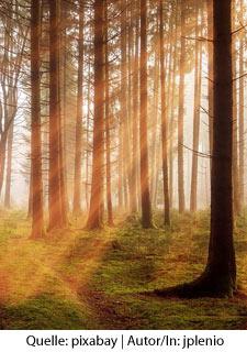 Waldbaden - Shinrin Yoku Achtsamkeitswoche