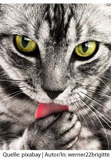 Tiere - deine spirituellen Wegbegleiter
