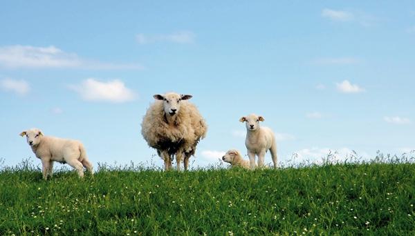 Ethische Motive für Vegetarismus